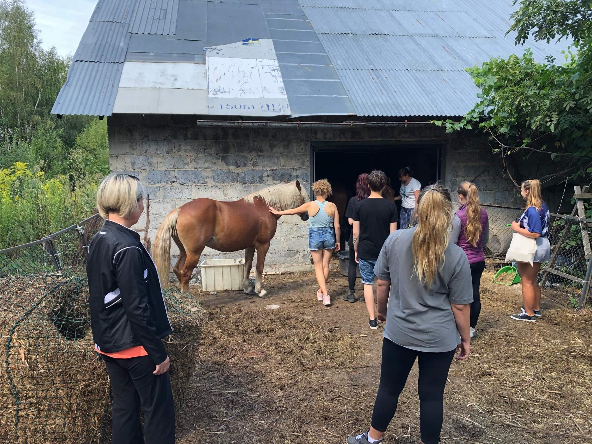Stadnina koni w Sosnówce