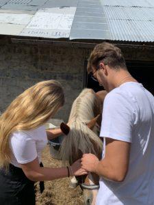Zdjęcie przedstawia spotkanie konia z wolontariuszami. Wolontariusze głaszczą zwierzę,aby mogło one jak najlepiej poznać nowe osoby.